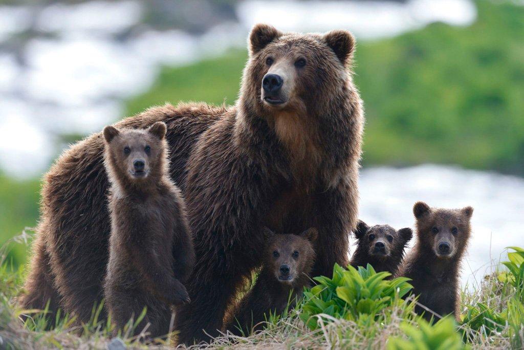 1-Kamchatka-bears_web