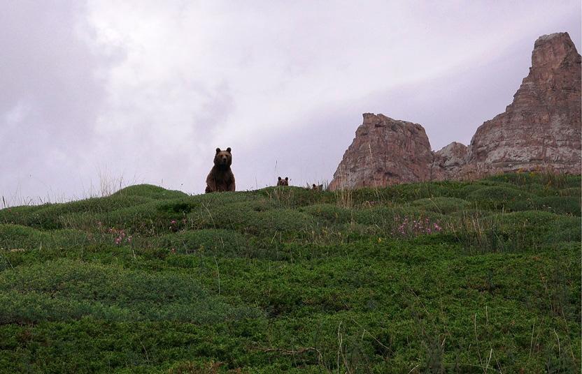 en-busca-de-osos